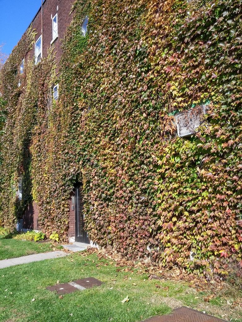 Appartement 1 Chambre a louer à Notre-Dame-de-Grâce a 2325-3405 Oxford - Photo 05 - PagesDesLocataires – L19485